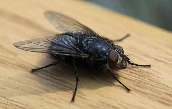 a house fly crawling in the kitchen
