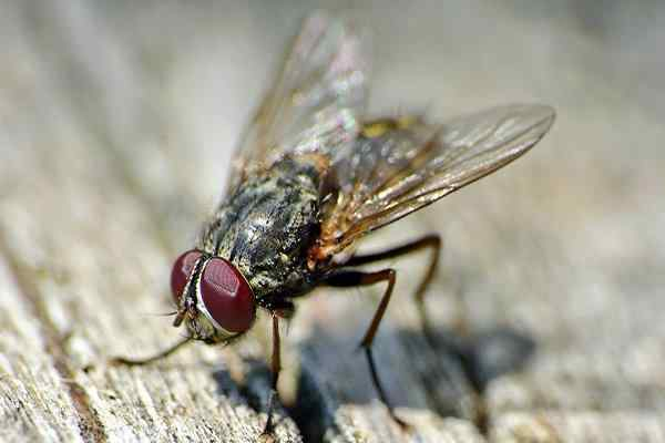house fly crawling on picnic table