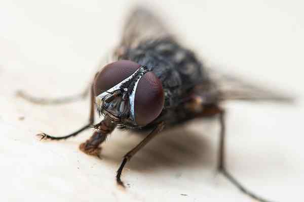 a house fly tasting a kitchen countertop