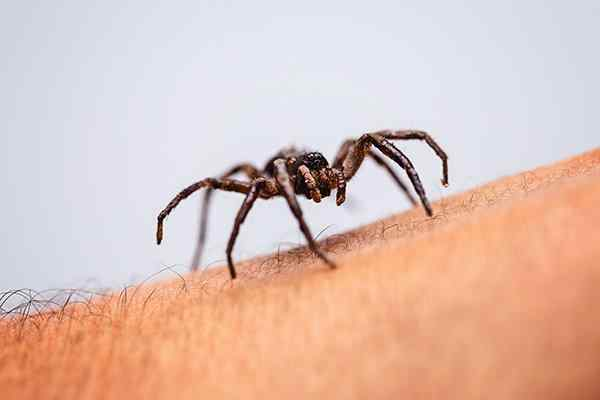 a house spider crawling on an arm