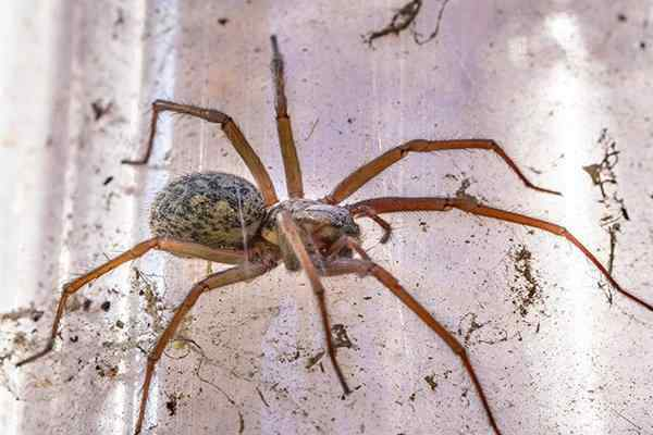 a house spider crawling in a web