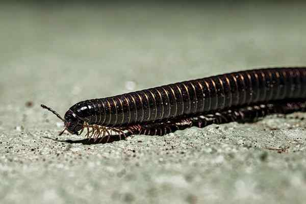 a millipede crawling on the ground