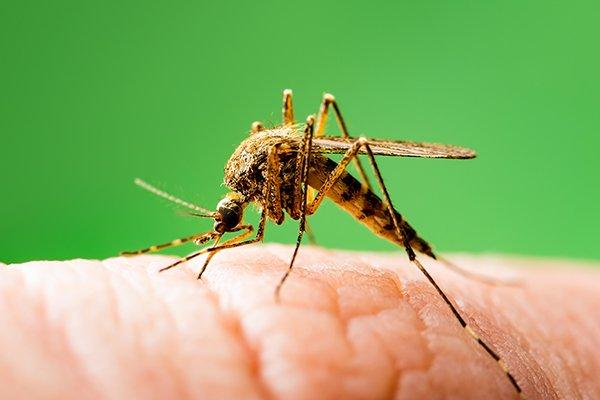 a mosquito biting a human finger