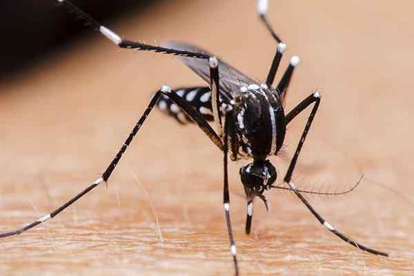mosquito biting skin spreading disease