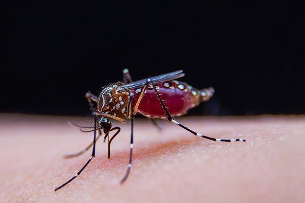 a mosquito drinking blood through a humans skin