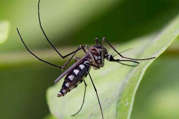 a mosquito on a plant