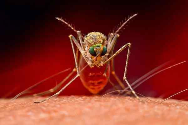 a mosquito biting a human