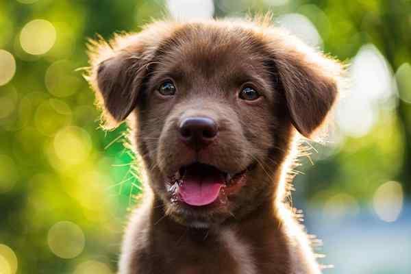 a pest free puppy