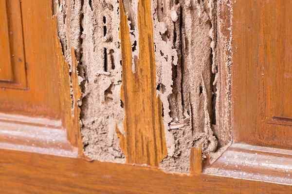 termite damage on kitchen cupboards
