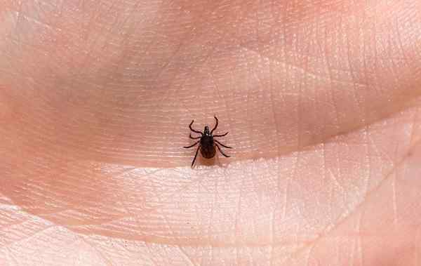 a tick crawling on a residents hand