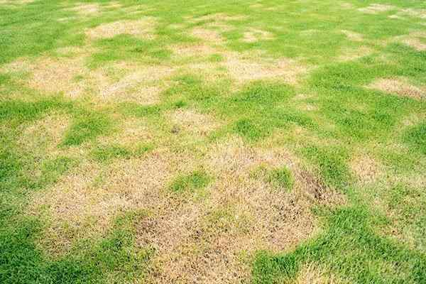 Lawn Pest Control For Aphids Brown Patch And More