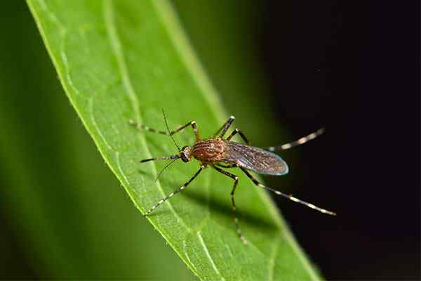 a mosquito sitting on a leaf