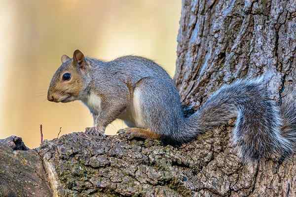 squirrel sitting on a tree branch