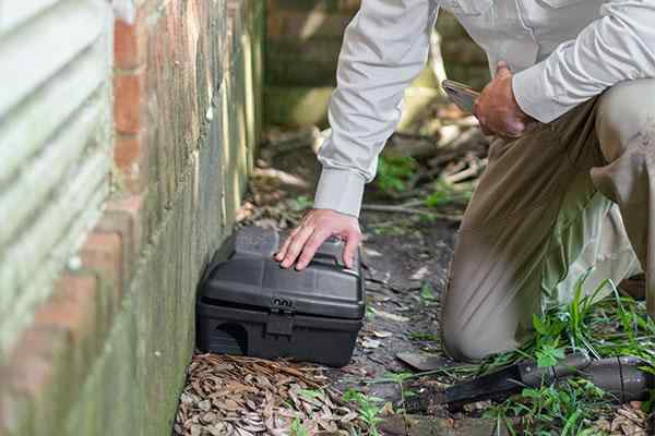 a technician evaluating a rodent station