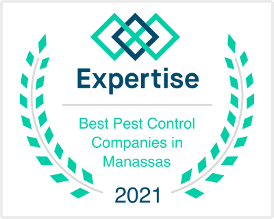 Miche Pest Control is one of the Best Pest Control Companies is Manassas in 2021
