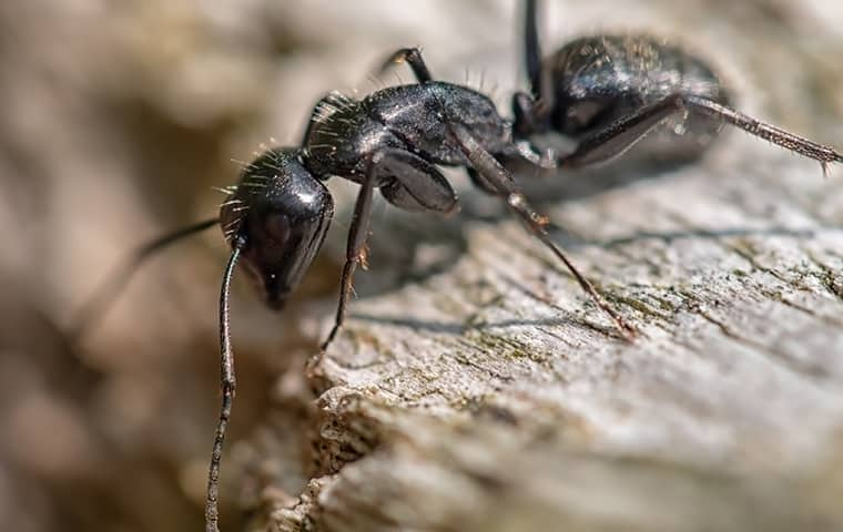 an ant crawling on wood in a yard in fairfax virginia