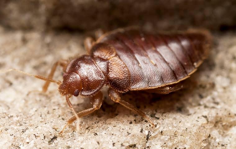 Miche Pest Control provides Bed Bug Control services in Baltimore, Fairfax & Washington DC