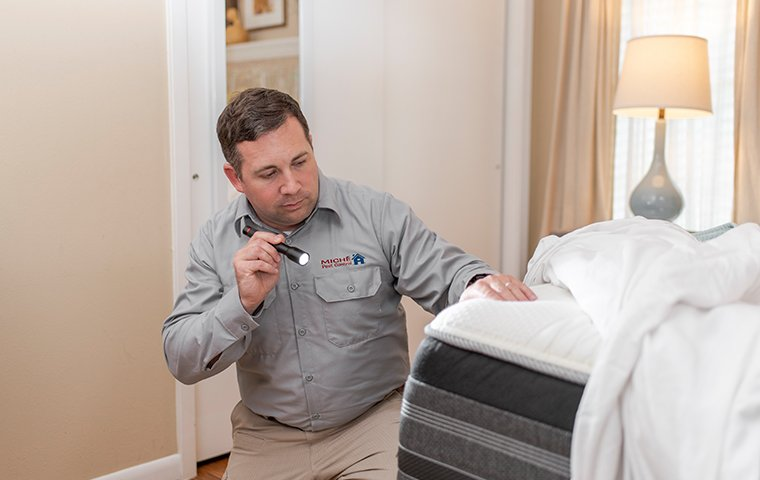 Miche Pest Control provides exterminating services for bed bugs in DC, MD & VA