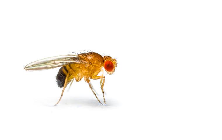 fruit fly in Washington DC