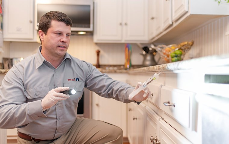 a pest control technician applying cockroach bait to counters in a washington d.c. home
