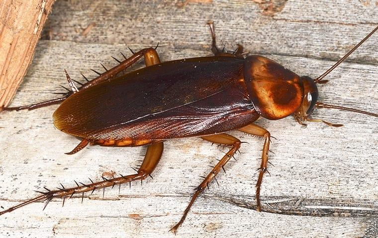 a cockroach crawling on a wooden fence outside a home in Washington DC