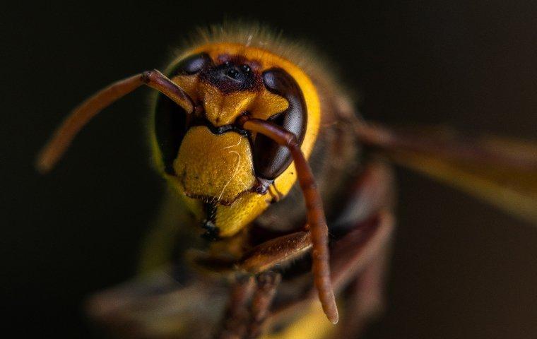 hornet on a bush