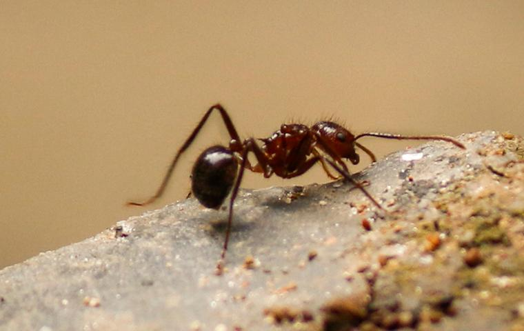 pest control in northern virginia, maryland and washington dc