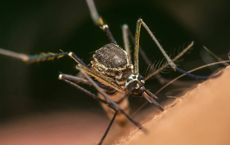 a mosquito biting a resident of bristow virginia