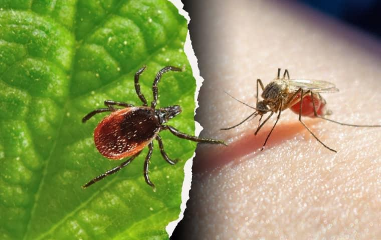 mosquito and tick control in manassas virginia