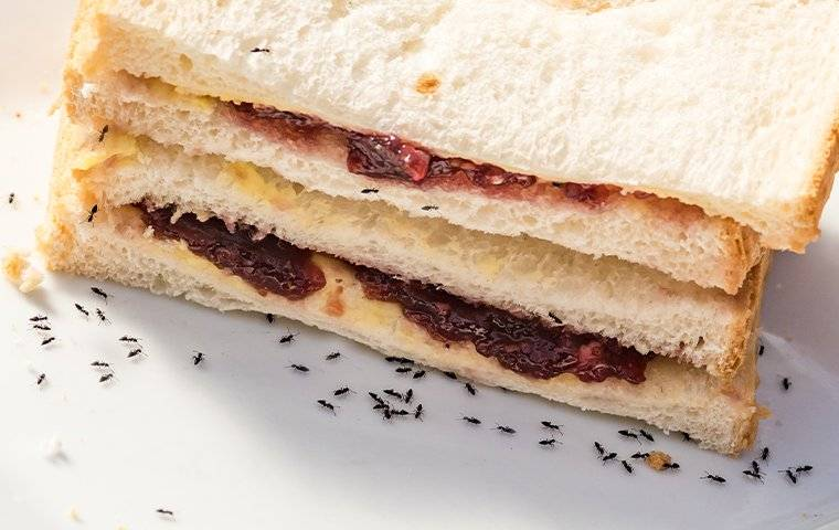 a colony of ants crawling on a sandwich