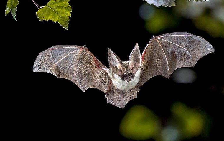 a bat flying in a nwe jersy backyard at night