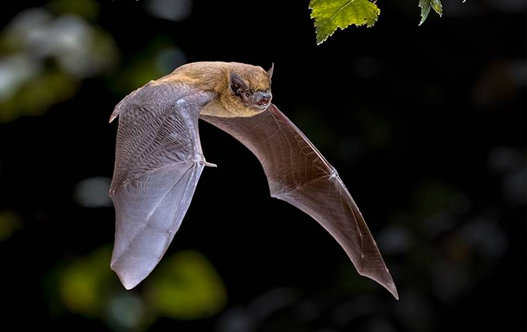bat flying on dark background with leaves
