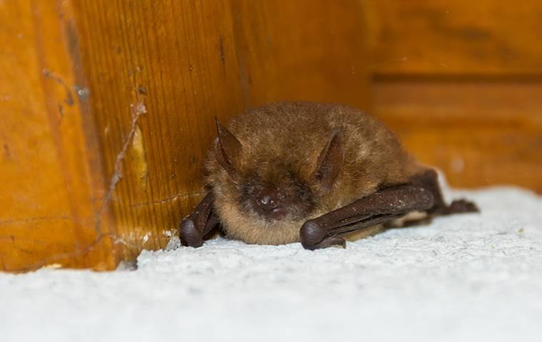 a small bat in a home