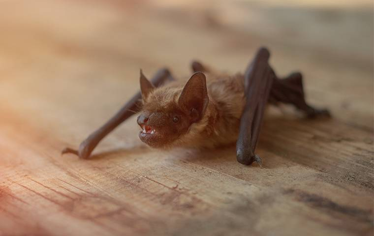 bat on a wooden table