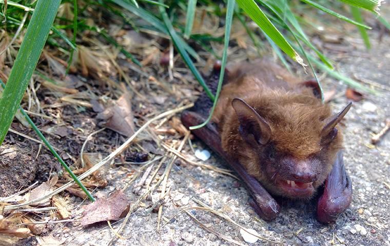 bat on the sidewalk