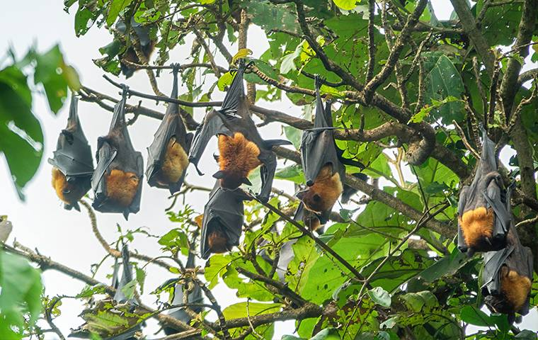 bats hanging in a tree