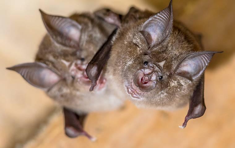 bats looking up