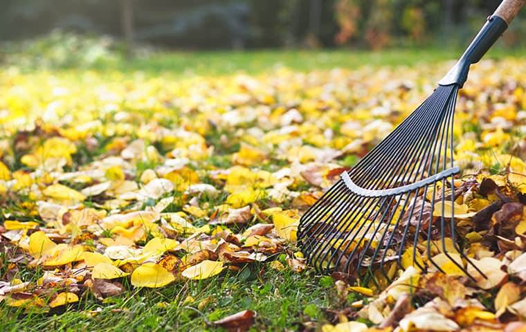 Raking a yard filled with leaves in the fall