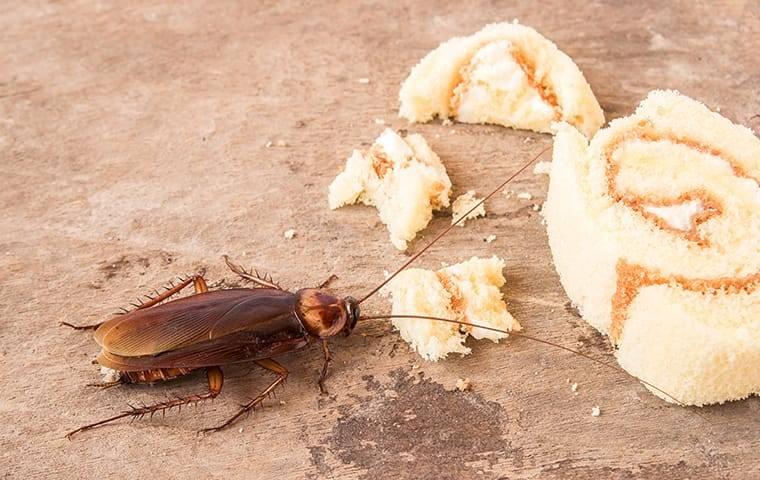 roach eating food on city street