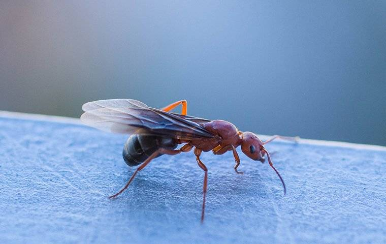 a winged ant on a piece of furniture