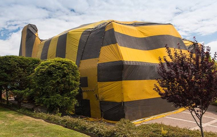 fumigation tent on house