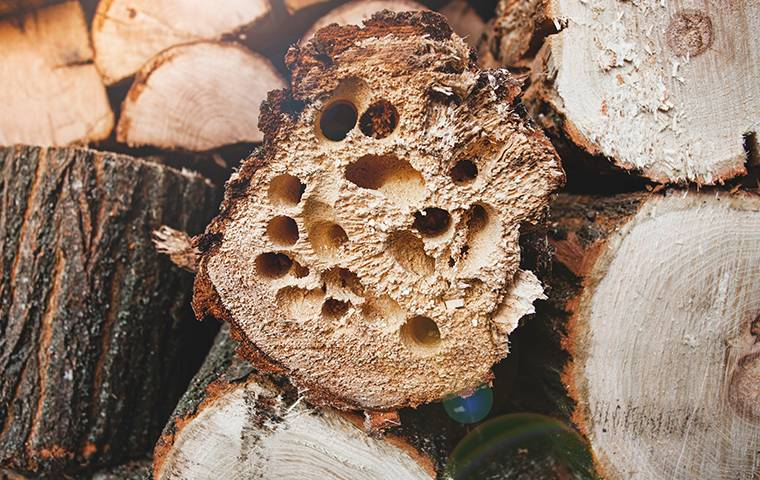insects inside stack of firewood