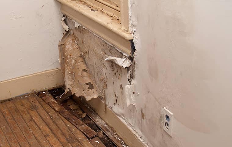 moisture damage on a wall