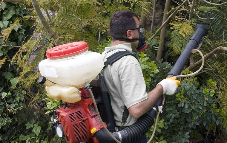 mosquito treatment pest control