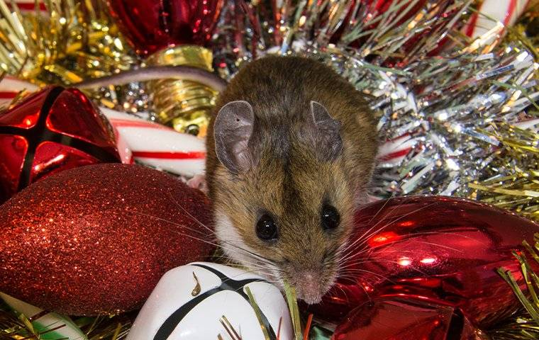 a mouse in christmas decorations