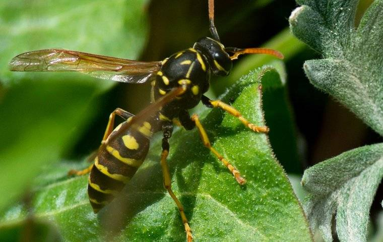 paper wasp on a green plant