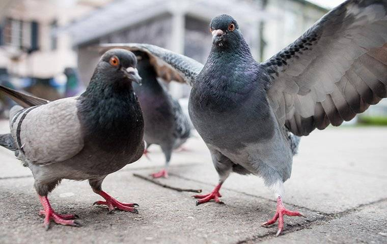 pigeons on the cement wall of a commercial building