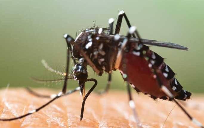close up of mosquito biting skin