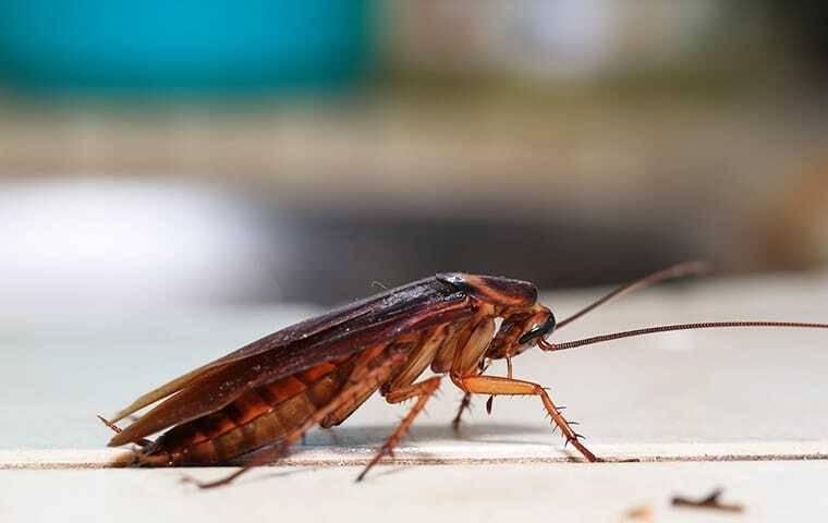 cockroach inside