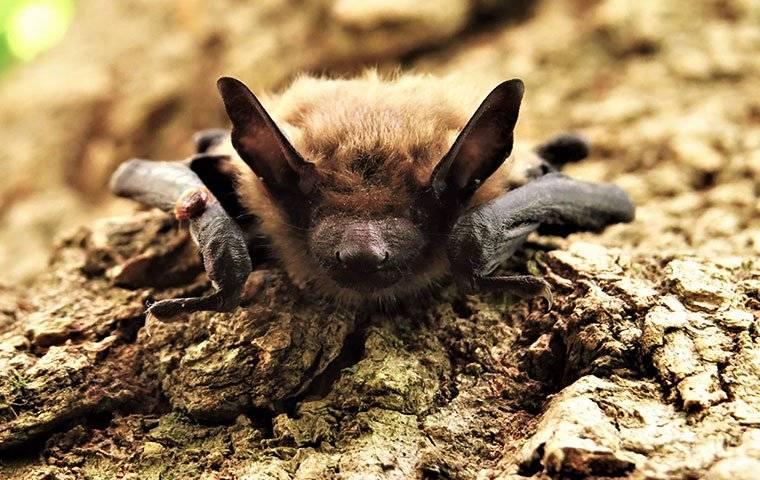 brown bat on the ground